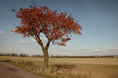 Apfelbaum im Herbst Lizenzfreie Stockbilder