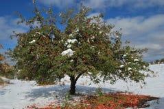 Apfelbaum im Schnee lizenzfreie stockfotos