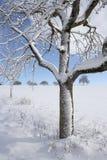 Apfelbaum im Winter lizenzfreie stockfotografie