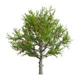 Apfelbaum lokalisiert. Vektorillustration Lizenzfreie Stockfotos