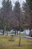 Apfelbaum mit Äpfeln auf den Niederlassungen lizenzfreies stockfoto