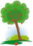 Apfelbaum mit rotem Apfel Lizenzfreie Stockfotografie