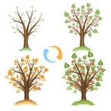 Apfelbaum-Saisonzyklus lizenzfreie abbildung