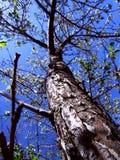 Apfelbaum und blauer Himmel Lizenzfreie Stockbilder