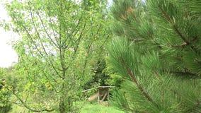 Apfelbaum und Kiefer im Bauernhofgarten stock footage