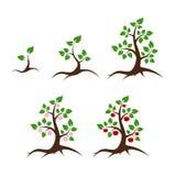 Apfelbaum-Vektorillustration Stockfoto