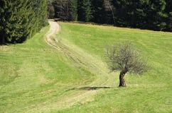Apfelbaum am Weg Stockbilder