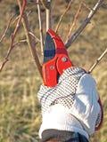 Apfelbaumarbeit stockbild