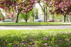 Apfelbaumblumen über Weiß Stockbild