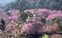 Apfelbaumblumen über Weiß Lizenzfreies Stockbild
