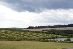 Apfelgarten Lizenzfreies Stockfoto