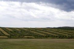 Apfelgarten Stockfotografie