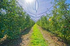 Apfelgarten in der Herbstzeit Lizenzfreie Stockbilder