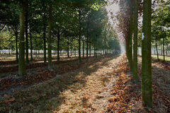 Apfelgarten, reife Früchte, die an der Niederlassung hängen Lizenzfreies Stockfoto
