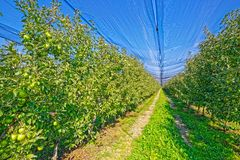 Apfelgartenerntezeit Lizenzfreie Stockbilder