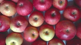 Apfelhintergrundkamera, die sich horizontal bewegt stock video