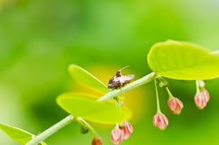 Aphid insect in green nature Stock Photo