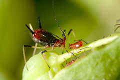 Aphid with nice background color Royalty Free Stock Photo