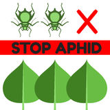 Aphid pest vector illustration Royalty Free Stock Image