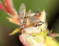 Aphids on the plant. macro. In the park in nature stock photography