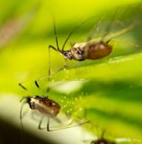 Aphids on the plant. macro. In the park in nature stock photos