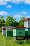 aphrodisiac Κυψέλες στο μελισσουργείο Μελισσοκομία Στοκ Φωτογραφίες