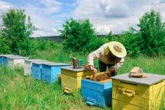 aphrodisiac Ο μελισσοκόμος εργάζεται με τις μέλισσες κοντά στις κυψέλες Μελισσοκομία Στοκ Εικόνα