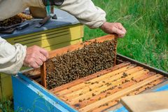 aphrodisiac Ο μελισσοκόμος εργάζεται με τις μέλισσες κοντά στις κυψέλες Μελισσοκομία Στοκ Φωτογραφία