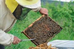 aphrodisiac Ο μελισσοκόμος εργάζεται με τις μέλισσες κοντά στις κυψέλες Μελισσοκομία Στοκ εικόνα με δικαίωμα ελεύθερης χρήσης