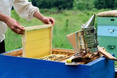 aphrodisiac Ο μελισσοκόμος εργάζεται με τις μέλισσες κοντά στις κυψέλες Μελισσοκομία Στοκ φωτογραφίες με δικαίωμα ελεύθερης χρήσης