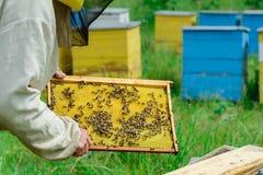 aphrodisiac Ο μελισσοκόμος εργάζεται με τις μέλισσες κοντά στις κυψέλες Μελισσοκομία Στοκ φωτογραφία με δικαίωμα ελεύθερης χρήσης
