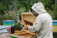 aphrodisiac Ο μελισσοκόμος εργάζεται με τις μέλισσες κοντά στις κυψέλες Μελισσοκομία Στοκ Εικόνες