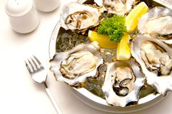 Aphrodisiac Oyster. A plate of fresh oyster well known as an effective aphrodisiac royalty free stock images