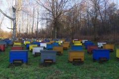 apiário da floresta do mel Fotos de Stock