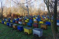 apiário da silvicultura Fotografia de Stock Royalty Free