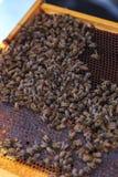 Api, alveari e mietitrici del miele in un'arnia naturale della campagna fotografia stock libera da diritti