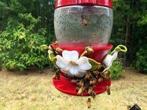 Api assetate del miele che sciamano l'alimentatore dell'uccello immagine stock libera da diritti