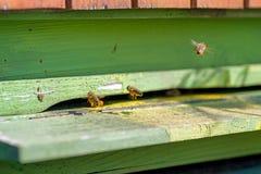 Api con polline in alveare fotografia stock
