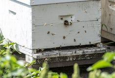 Api del miele che entrano e che escono in un alveare immagini stock