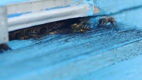Api del miele che sciamano e che volano intorno al loro alveare archivi video