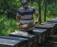 api del miele e come preoccuparsi nel Vietnam fotografie stock