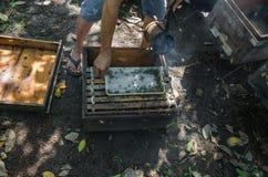 api del miele e come preoccuparsi nel Vietnam fotografia stock libera da diritti
