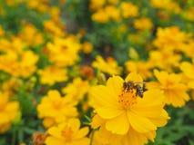 Api e fiori Fotografia Stock