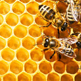 Api sui honeycells Fotografia Stock Libera da Diritti