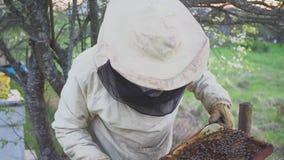 Api sul favo L'apicoltore del raccolto del miele rimuove delicatamente le api dalla struttura macro dell'arnia HD stock footage