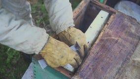 Api sul favo L'apicoltore del raccolto del miele rimuove delicatamente le api dalla struttura macro dell'arnia HD archivi video