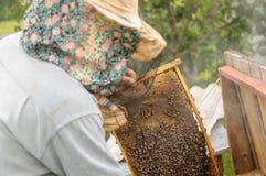 Api sulle api di un'arnia sulle api di un'arnia su un'arnia Immagine Stock