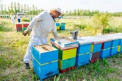 Apiarist, μελισσοκόμος που εργάζεται στο μελισσουργείο Στοκ Φωτογραφίες