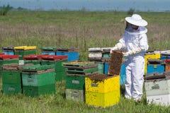 Apiarist που προσέχει πέρα από τις κυψέλες μελισσών του Στοκ Φωτογραφίες