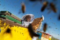 Apiarist που προσέχει πέρα από τις κυψέλες μελισσών του Στοκ Φωτογραφία